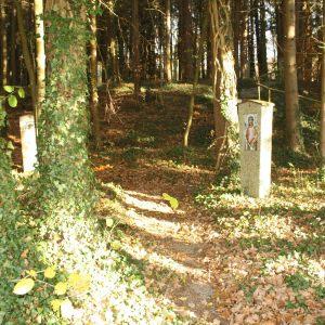 Pilgerweg-im-Wald-scaled