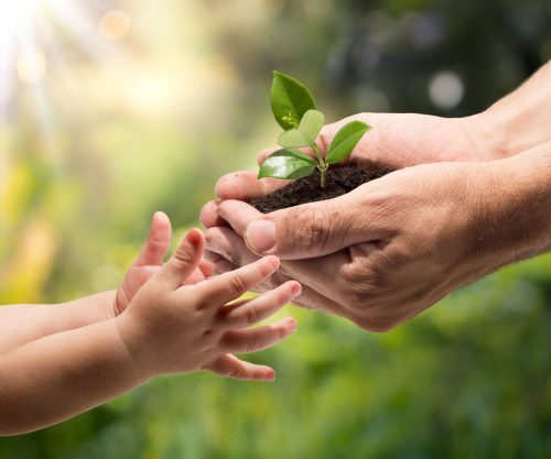 23531802 - hands of a child taking a plant from the hands of a man - garden